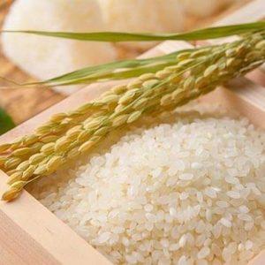 Hạt gạo Nhật